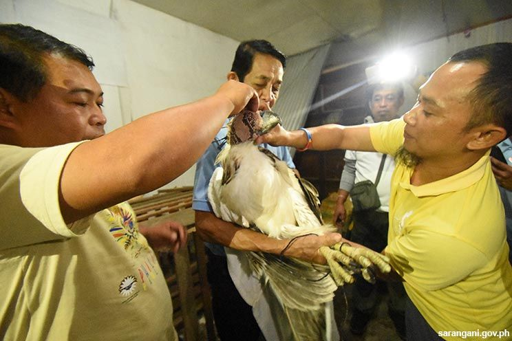 PEC inspects rescued eagle