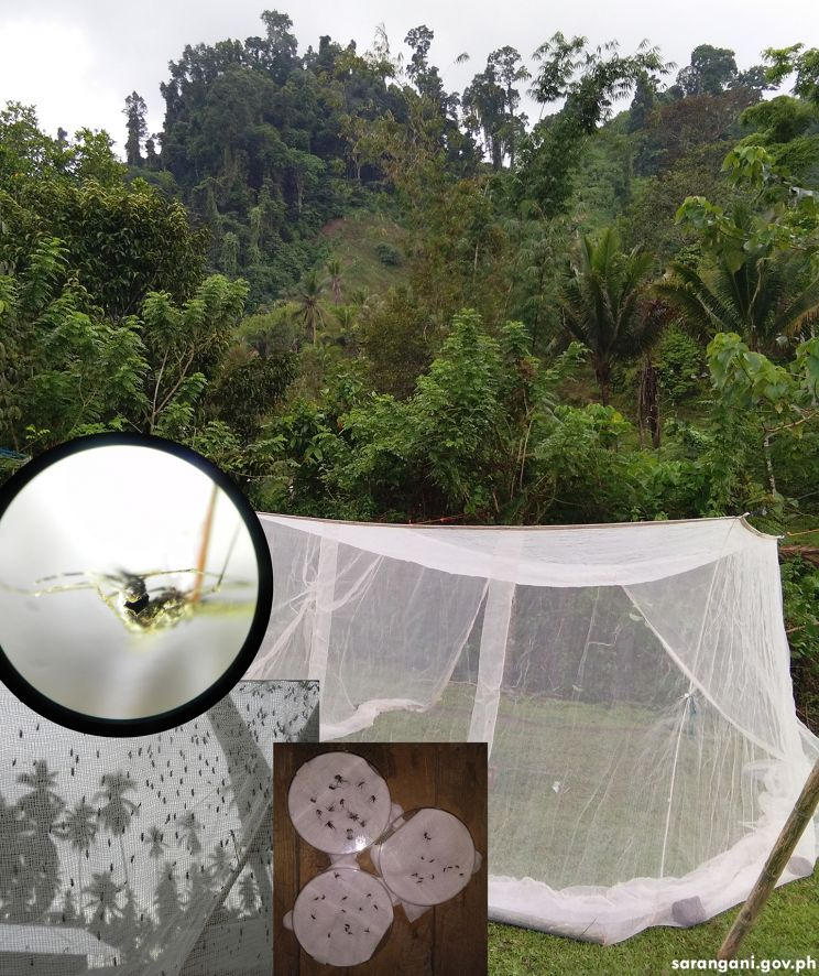 Vector Mapping