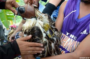 Gearing up Philippine Eagle Sarangani Pride