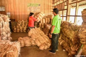 Beefing up Abaca industry