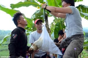 Philippine Eagle Sarangani Pride captured