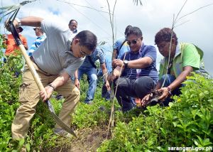 Bamboo planting for climate change