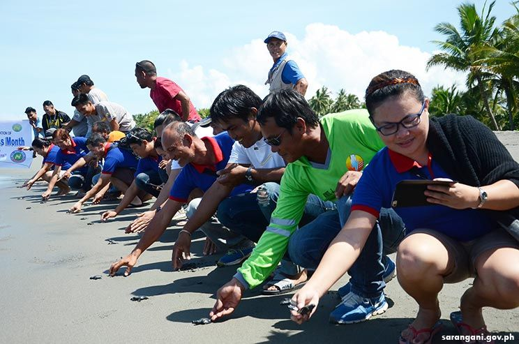 Release of pawikan hatchlings